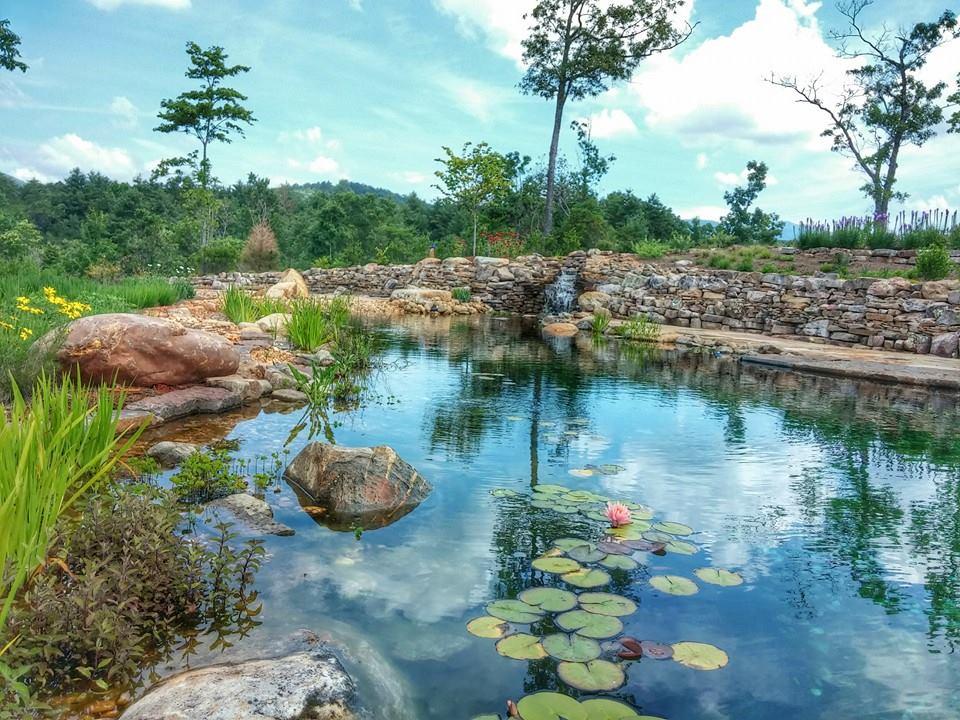 The pond elohee center for Koi zone pond aquatics